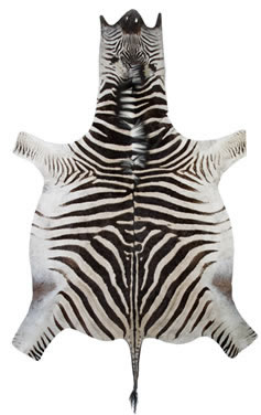 Zebra Hide Rugs Skins And Kadu Hides
